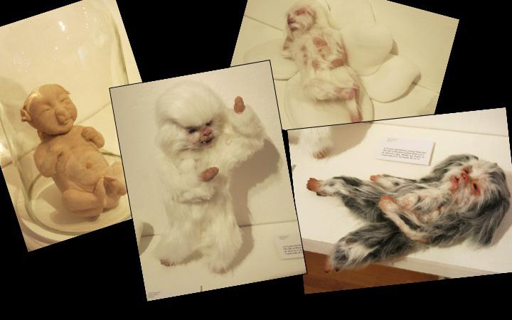 Birth and development of Human Animal Baby Pet