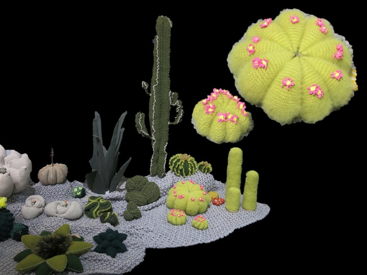 Knitted cacti copyright Visuology